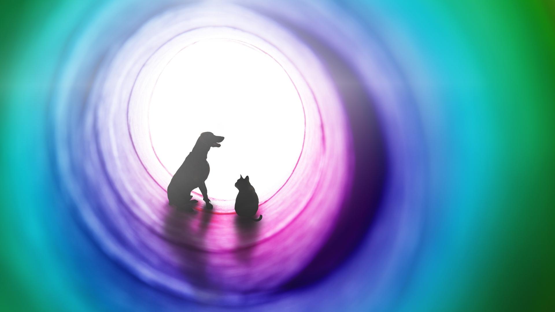 Pet Loss Workshop art